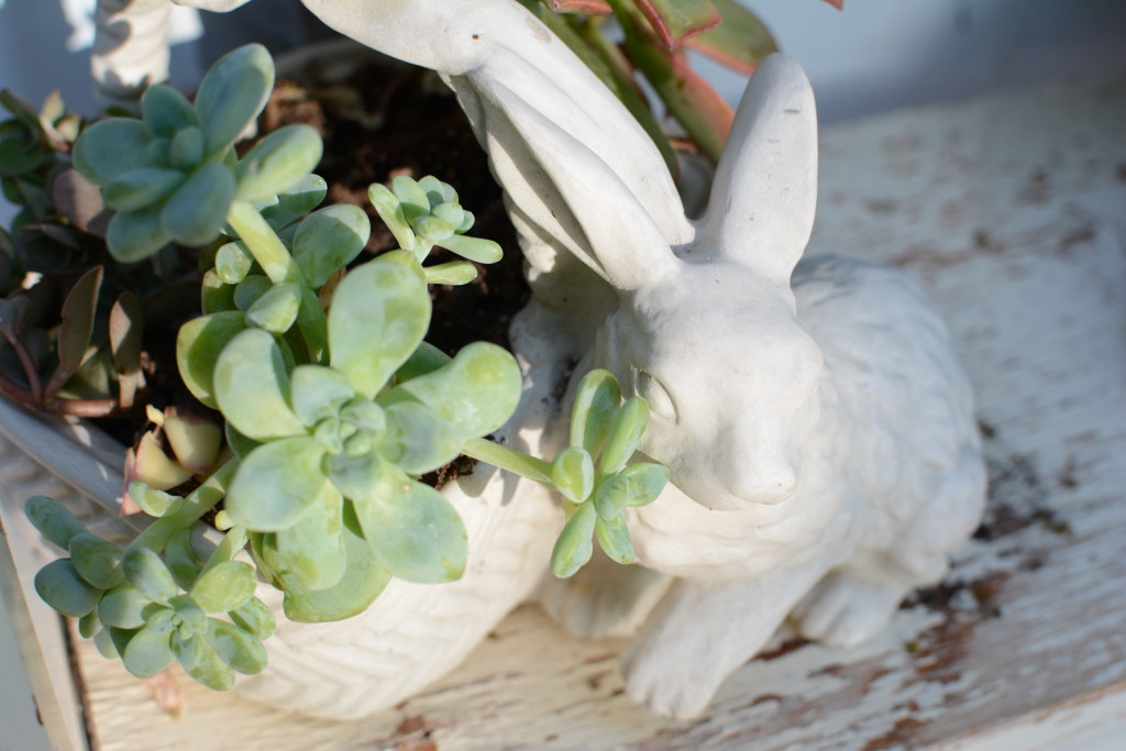 bunny statue with succulents