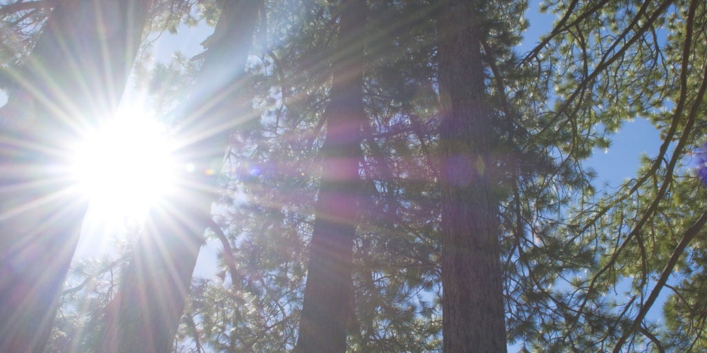 Lake Tahoe 2016 sunshine thru trees