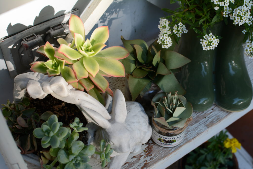 paper and real succulent planters | Barb Ann Designs |