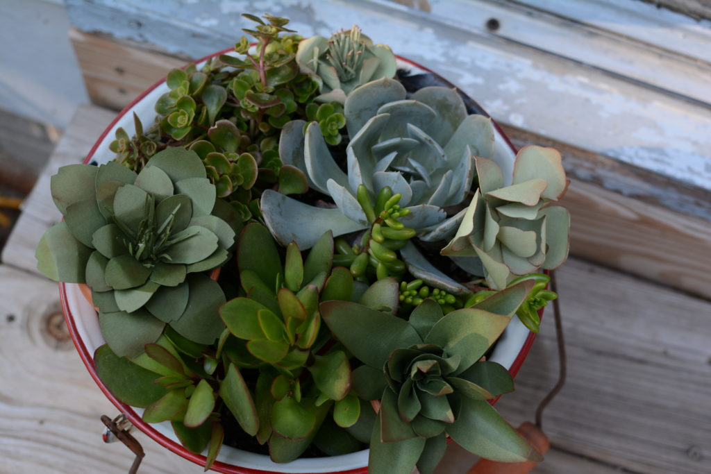 paper succulents plus real ones | Barb Ann Designs |