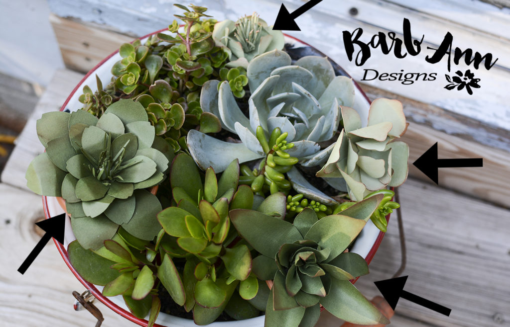 showing paper succulents with arrows